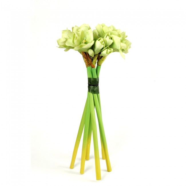 Vrille d 39 amarillys herve gambs site for Amaryllis vente